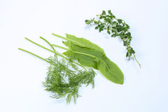 Mixed Herbs Sorrel dill thyme. On white background Royalty Free Stock Photo