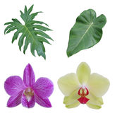 Mixed isloated tropical leaves and flowers Royalty Free Stock Images