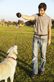 Labrador and Trainer with Dog Chew Toy at Park. A mixed Labrador female dog looking up at the chew toy her trainer is holding Stock Photo