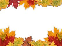 Mixed-Leaf Frame royalty free stock image