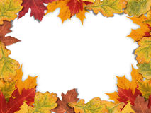 Mixed-Leaf Frame Stock Images