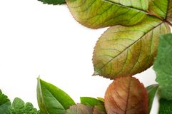 Mixed leaf frame Royalty Free Stock Photography