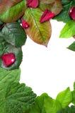 Mixed leaf frame Stock Photo