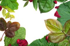 Mixed leaf frame Royalty Free Stock Image