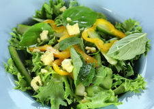 Mixed Leaf Salad Stock Photography