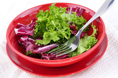 Mixed leaf salad in a red bowl Royalty Free Stock Photography