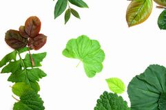 Mixed leaves Royalty Free Stock Photo