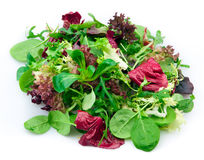 Mixed lettuce Royalty Free Stock Images
