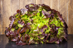 Mixed lettuce leaves Stock Photography