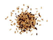 Mixed Malted Barley on White Background. Mixed chocolate, roasted and pale malted barley photographed on a white background.  This mixture of malts is typical Stock Photo