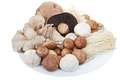 Mixed mushrooms Stock Photography