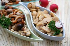 Mixed mushrooms. Some different kind of mushrooms in beautiful table-ware stock image