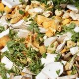Mixed Mushrooms Royalty Free Stock Image