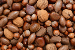 Mixed nuts - chestnuts, pecans, walnuts, brazils and hazelnuts Stock Photography