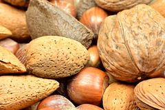 Mixed nuts. A close up photo of mixed nuts: almonds, brazil nuts, hazel nuts, wallnuts Stock Photos