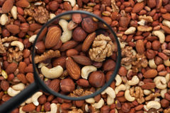 Mixed nuts in a magnifying glass Stock Photos
