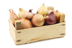 Mixed onions in a wooden box Stock Photography