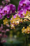 Mixed orchid background Stock Image