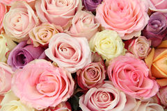 Mixed pastel roses Stock Photography