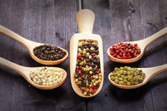 Mixed peppercorns in a wooden spoon Royalty Free Stock Images