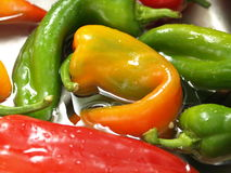 Mixed peppers. Closeup of mixed peppers in water stock image