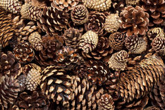 Mixed Pinecone Background Stock Images