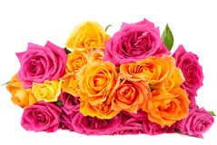 Mixed pink and yellow rose Royalty Free Stock Photos