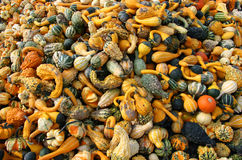Mixed Pumpkins Royalty Free Stock Photography