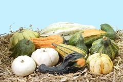 Mixed Pumpkins Royalty Free Stock Photo