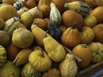 Mixed Pumpkins Royalty Free Stock Photos