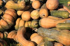 Mixed Pumpkins on Farmers Market Stock Images