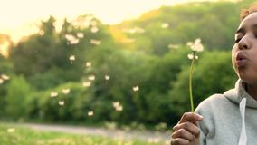Mixed race African American girl blowing Dandelion at Sunset stock video footage