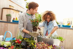 Mixed Race Couple Planting Rooftop Garden Together Royalty Free Stock Photography