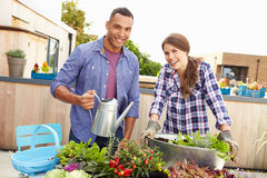Mixed Race Couple Planting Rooftop Garden Together Stock Images