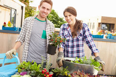 Mixed Race Couple Planting Rooftop Garden Together Royalty Free Stock Image