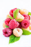 Mixed raspberries over light background. Closeup, selective focus Stock Image