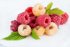 Mixed raspberries over light background. Closeup, selective focus Royalty Free Stock Images