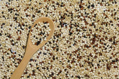 Mixed red white black quinoa with a wooden spoon Stock Images