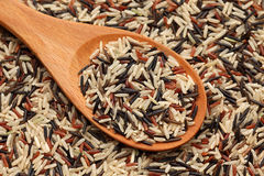 Mixed rice in a wooden spoon Royalty Free Stock Image