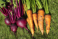 Mixed root vegetables. Bunch of carrots and beetroot on ground Stock Photography
