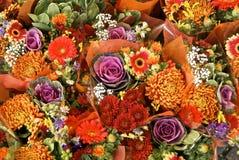 Mixed rose Stock Photo
