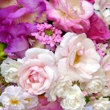 MIXED ROSES. FROM AN ENGLISH COUNTRY GARDEN Royalty Free Stock Photography