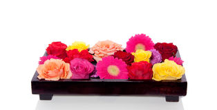 Mixed roses and gerber Royalty Free Stock Photos