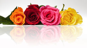 Mixed roses relection Royalty Free Stock Images