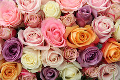 Mixed pastel roses Royalty Free Stock Image