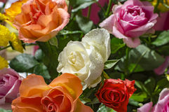 Mixed roses with water Royalty Free Stock Photos