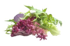 Mixed salad. Loose lettuce and spinach  leaves isolated Stock Image