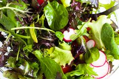 Mixed salad. Freshly prepared mixed salad greens for healthy eating Royalty Free Stock Photos