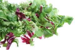 Mixed Salad. Mixed leaf lettuce salad on a white studio background Stock Image