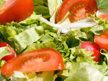 Mixed salad. Triple color mixed salad Royalty Free Stock Photos
